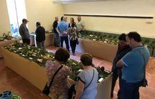 L'Exposició de Bolets Vila del Morell arriba a la 25a edició