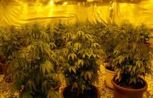 Detenen tres germans ampostins per tenir una plantació de marihuana a Alcanar