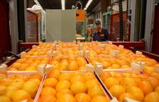 Primer pla de caixes de mandarines preparades per a l'exportació als magatzems d'Agrofruit. Imatge del 19 de juny de 2015 (horitzontal)