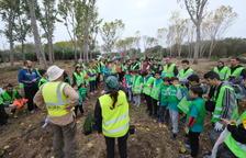 Más de 400 personas reforestan el Francolí