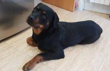 Shaitan, el gos que va morir a mans d'un agent, el passat 11 de gener.