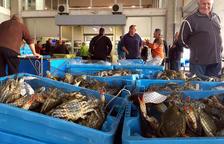 Els pescadors de la Ràpita capturen més d'una tona diària de cranc blau al gener