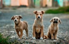 Imagen de archivo de tres cachorros.