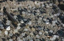 Mediterrània demana que es busquin els culpables de l'aparició de boles de plàstic a la Pineda
