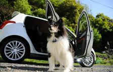 Com s'ha de viatjar en cotxe de manera segura amb gossos?