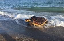 Els pescadors de Tarragona han atrapat 126 tortugues marines en xarxes des de l'any 2018