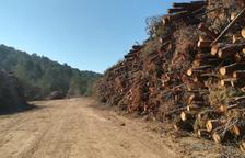 ERC cree que habido una «actitud mal proporcionada» en la tala de árboles en Sant Salvador