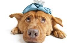 Com fer la maniobra de Heimlich que pot salvar la vida al nostre gos?
