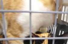 Busquen els propietaris de dos gats 'possiblement' oblidats dins d'un tren al Vendrell