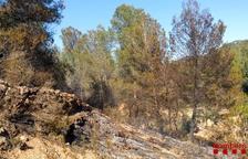 Vuit vehicles de Bombers treballen en un incendi entre Corbera d'Ebre i Gandesa