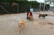 El refugio de animales Baix Camp denuncia «acoso y presiones» para evitar que se instalen en Riudoms