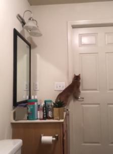 Tancaven al gat, però sempre s'escapava...
