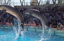 Sancionen l'Aquopolis Costa Daurada per tenir sis dofins en una piscina inadequada