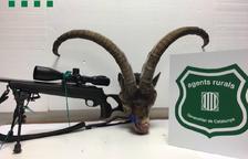 Denuncien un caçador suec per disparar a una cabra salvatge a Roquetes