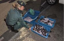 Intervienen 121 kilos de pescado fresco preparado para la venta ilegal