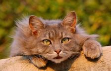 El xip en els gats, questió de vida o mort