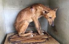 Detingut un veí de Valls per matar gossos de caça que no aconseguia vendre
