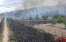 Controlat l'incendi de vegetació forestal de Corbera d'Ebre
