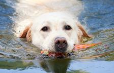 Consells per ajudar al teu gos a afrontar la calor
