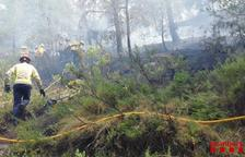 L'incendi de Móra d'Ebre ha cremat 2.739 metres quadrats