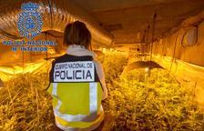 Cinc detinguts a Valls per proveir de marihuana a distribuïdors de la resta de l'Estat