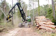 La conservació dels boscos públics ebrencs enfronta el dilema entre la conservació i la gestió de la massa forestal