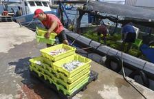 Els pescadors de Tarragona tornen a la mar entre crítiques per la norma del triatge