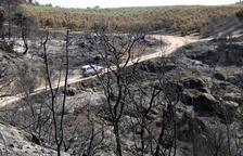 Els Agents Rurals calculen en 5.046 les hectàrees afectades per l'incendi de la Ribera d'Ebre