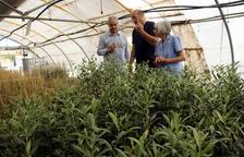 L'entitat ACUDAM posa a la venda oliveres solidàries per 5 euros per repoblar la zona de l'incendi de Ribera d'Ebre