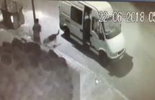 Pacma difon les imatges de l'abandonament d'un gos al Vendrell