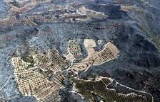 La FCAC estima en un miler les hectàrees d'olivera i ametller afectades per l'incendi de la Ribera d'Ebre