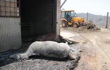 UP reclama la promulgació «urgent» de mesures de reposició del potencial productiu malmès pel foc a la Ribera d'Ebre