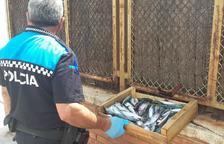Un agente con el pescado decomisado.