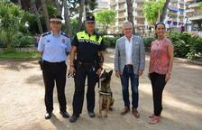 La Policia Local de Salou torna a disposar d'una unitat canina
