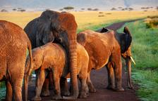 Tips per fer un turisme respectuós amb els animals