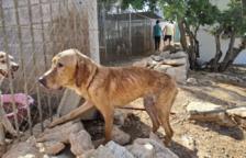 Denuncien la mort de diversos gossos en un criador d'Alcanar