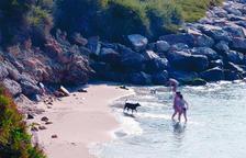Roda de Berà abre en la Cala Torrota la séptima playa para perros en Tarragona