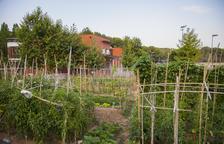 El Ayuntamiento sorteará 24 parcelas de huertos urbanos en Sant Salvador