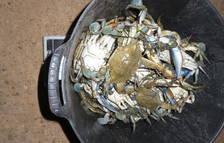 La Guàrdia Civil intervé al Delta més de 60 quilos de peix i marisc a pescadors furtius