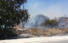 L'incendi dels Pallaresos ha cremat 9.600 metres quadrats de terreny agrícola