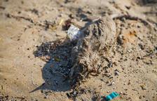 Rates mortes a la platja del Miracle i boles de plàstic a l'Arrabassada