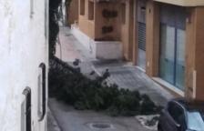 Carrers inundats, arbres caiguts i contenidors arrossegats per l'aigua al Baix Penedès