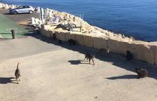 El Port de Tarragona y Tarraco Felina colaboran para controlar la colonia de 188 gatos en la zona