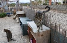 Riudoms quiere consensuar con los vecinos el traslado del Refugi Baix Camp