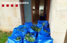 Desarticulado un grupo de origen serbio que cultivaba y traficaba con marihuana en el Catllar