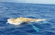 Localizan un cetáceo muerto cerca de la playa Cristall de Miami Playa