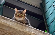 La Guàrdia Urbana es nega a recollir dos gats abandonats a Tarragona