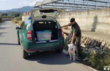 Los Agentes Rurales localizan un perro de raza potencialmente peligrosa suelto en Amposta