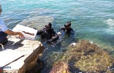 Dos denunciats per extreure dàtil de mar de la zona del Port de Cambrils
