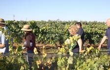 Una finca de Reus reuneix més de 100 varietats de vinya minoritàries o en perill d'extinció